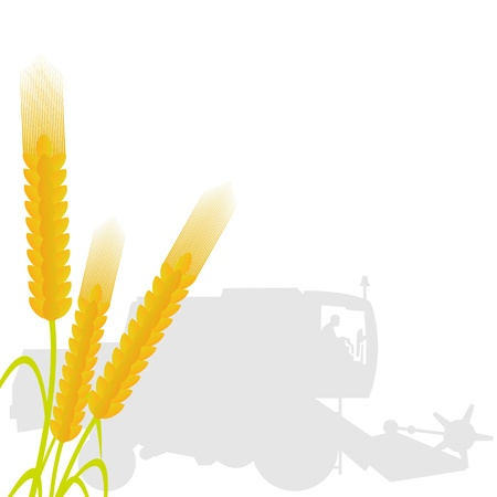 Ears of wheat on the background of the combine harvester. The illustration on a white background. Vector