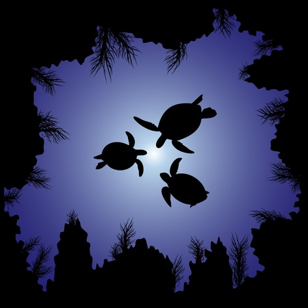 black sea: Sea turtles swim in the sea among the rocks