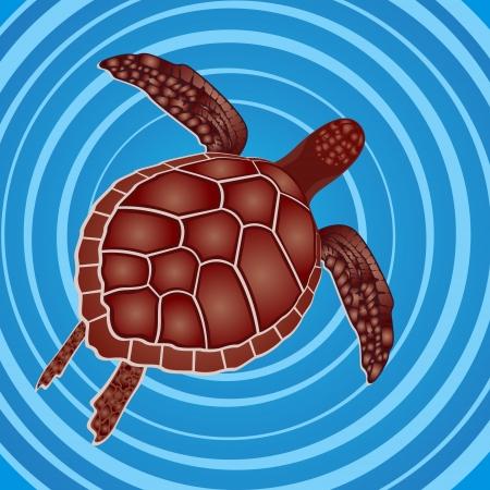 Het mariene leven. Zeeschildpad zwemmen in de zee.