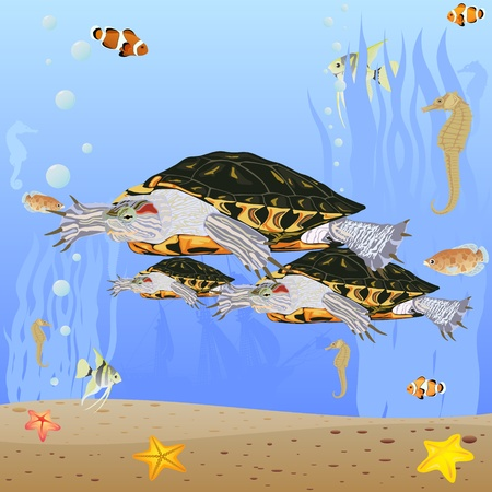 Marine life. Sea turtles swim in the sea. Vector