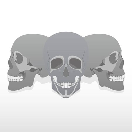 Three human skulls. Illustration on white background. Vector
