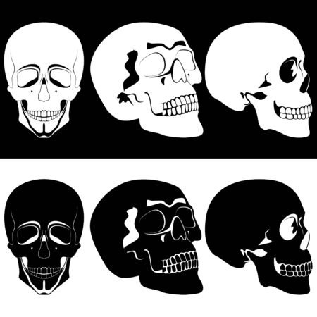 Several black and white human skulls. Illustration on black and white background. Vector