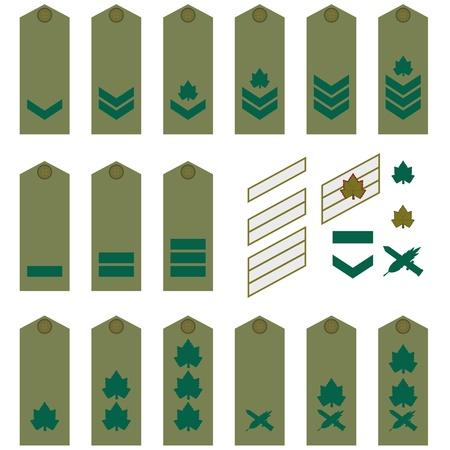 Epaulets, military ranks and insignia  Illustration on white background