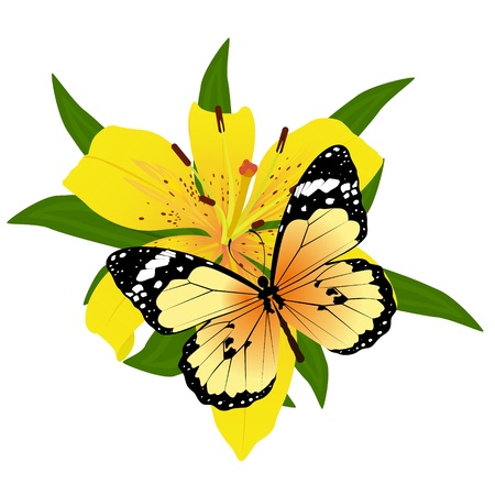 On a flower the butterfly sits. An illustration on a white background. Stock Vector - 16301049