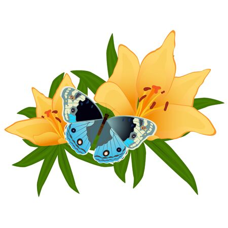On a flower the butterfly sits. An illustration on a white background. Stock Vector - 16301040
