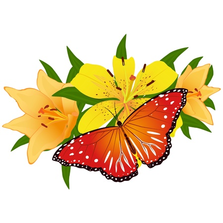 On a flower the butterfly sits. An illustration on a white background. Vector