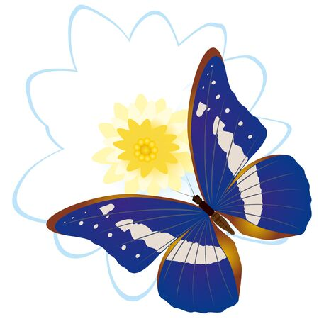 On a flower the butterfly sits. An illustration on a white background. Stock Vector - 16301037