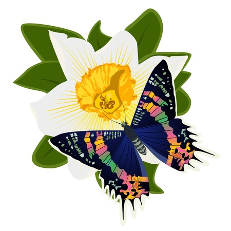On a flower the butterfly sits. An illustration on a white background. Stock Vector - 16301047
