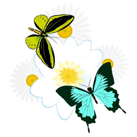 On a flower the butterfly sits. An illustration on a white background. Stock Vector - 16301050