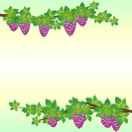 Vine with bunches of grapes. Abstract background on a theme of seasons. Vector