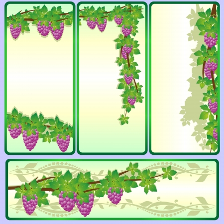 Vine with bunches of grapes banners on a colored background  Vector