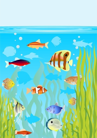 Aquarium fishes in their natural habitat  Vector