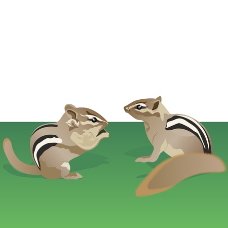 chipmunk: Two chipmunk in the meadow  Illustration on the theme of animals in nature  Illustration
