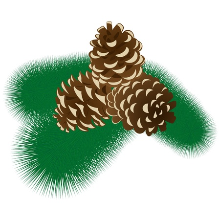 pine three: Three fir cones on a branch of pine tree  The illustration on a white background