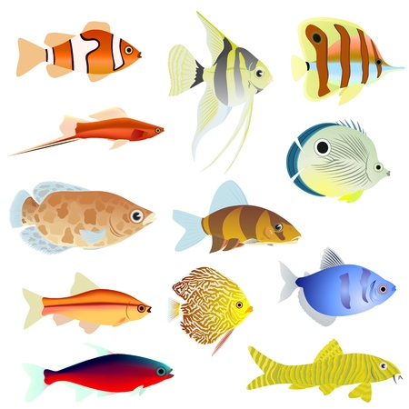 poisson aquarium: Ensemble de poissons d'aquarium Illustration