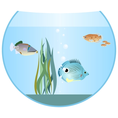 tail fin: Aquarium fish in an aquarium. The illustration on a white background.