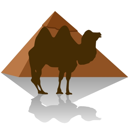 egyptian pyramids: Camel on the background of the Egyptian pyramids. The illustration on a white background.