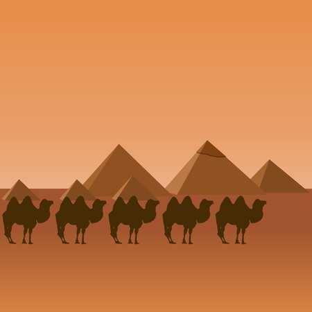 egyptian pyramids: Camels on the background of the Egyptian pyramids. The illustration on a white background.