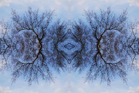 foglie: Frattale II generato da fotografia Stock Photo