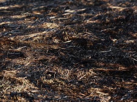 arson: Arson dry grass