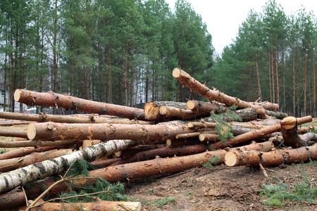 Milieu, natuur en ontbossing bos - afvallen van bomen in hout