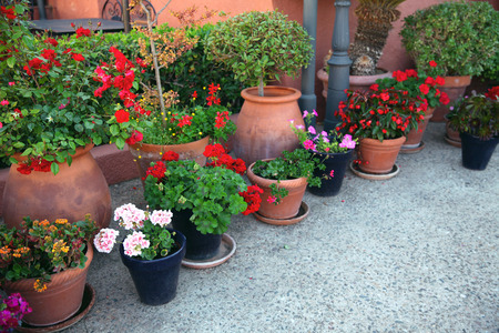 Gardening, flowers, decoration concept - many flowers in a flowerpots at street Stock Photo