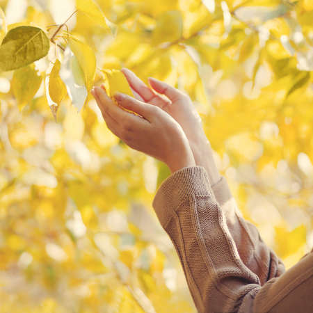 Autumn photo sensual female hands touch yellow leaves tree