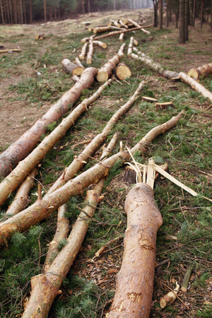 Environment, nature and deforestation forest - felling of trees