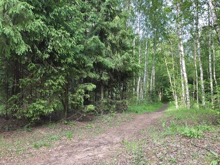 Coniferous and deciduous forest with a path