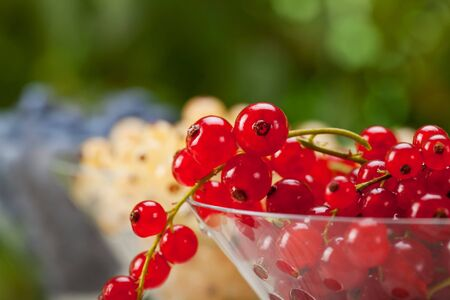 Currant fruits in glasses - Healthy Eating Stock Photo