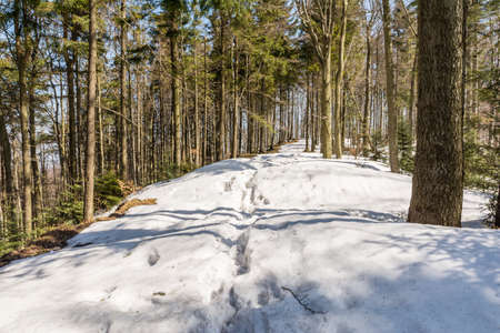 arrears: Small snowdrifts on the trail in the spring of arrears in the forest