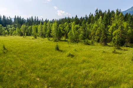quagmire: Mire (quagmire, peatland) in summer Stock Photo