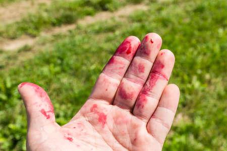 jugo de frutas: Dedos manchados de zumo de fruta de la zarzamora Foto de archivo