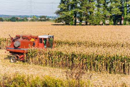 Biskupice radowskie, Poland - October 2, 2015: Red combine harvester during harvesting corn maize