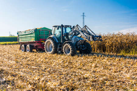 zea mays: Biskupice radowskie, Poland - October 2, 2015: Branded tractor with a green trailer full of harvested corn stands in the field