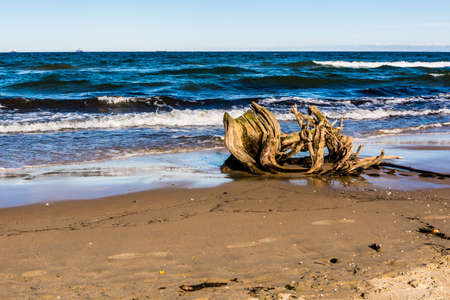 washed: Root of the tree washed up by the sea at the beach. Stock Photo