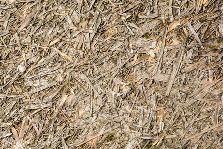 swarf: Old destroyed board Oriented strand board (OSB) - texture. Stock Photo