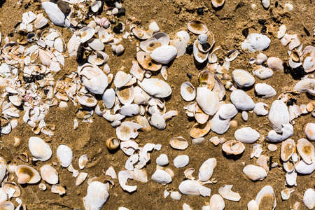 aggregates: Shells on the beach as a pattern. Stock Photo