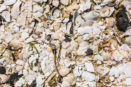 molluscs: Broken shells of molluscs form a pattern. Stock Photo