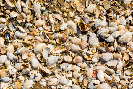 molluscs: Texture - pattern with many different seashells.