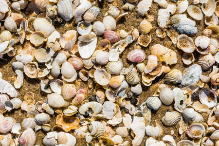 aggregates: Sand and shells as a natural texture.