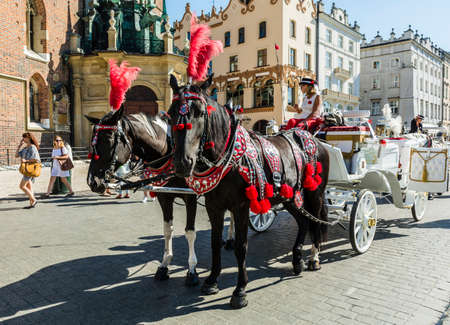 assumed: Krakow, Poland - August  26, 2016: Two decorated horses in harness droshky.