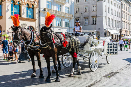 assumed: Krakow, Poland - August  26, 2016: Beautiful woman with reins black horse with a white drosky.