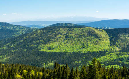 Different shades of the color of the spring greenery of the mountain forest. Stock Photo