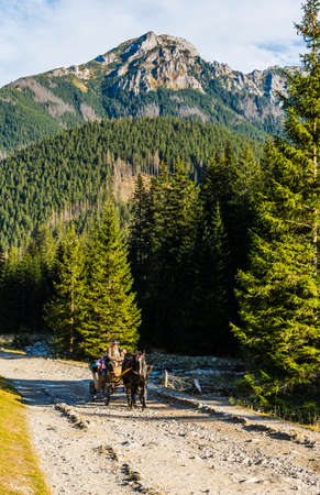 Witow, Poland - November 10, 2018: Fiacre carrying tourists by horse-drawn carriage through the Chocholowska Valley in the Tatra Mountains.