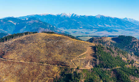 Timber harvesting in the forest on the slopes of mountain peaks.