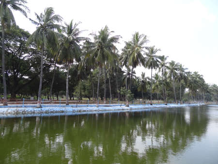 palm trees shadow on water, green and blue natural combination 版權商用圖片