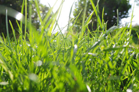 Closeup on grasses
