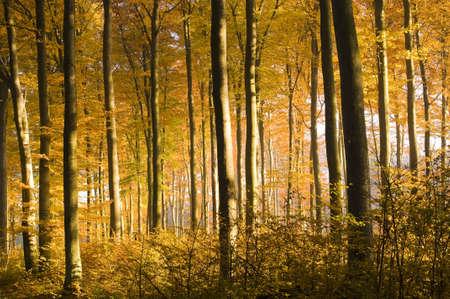 mushrooming: Autumn forest Stock Photo