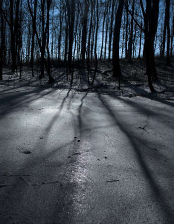 Winter beech forest and sun photo